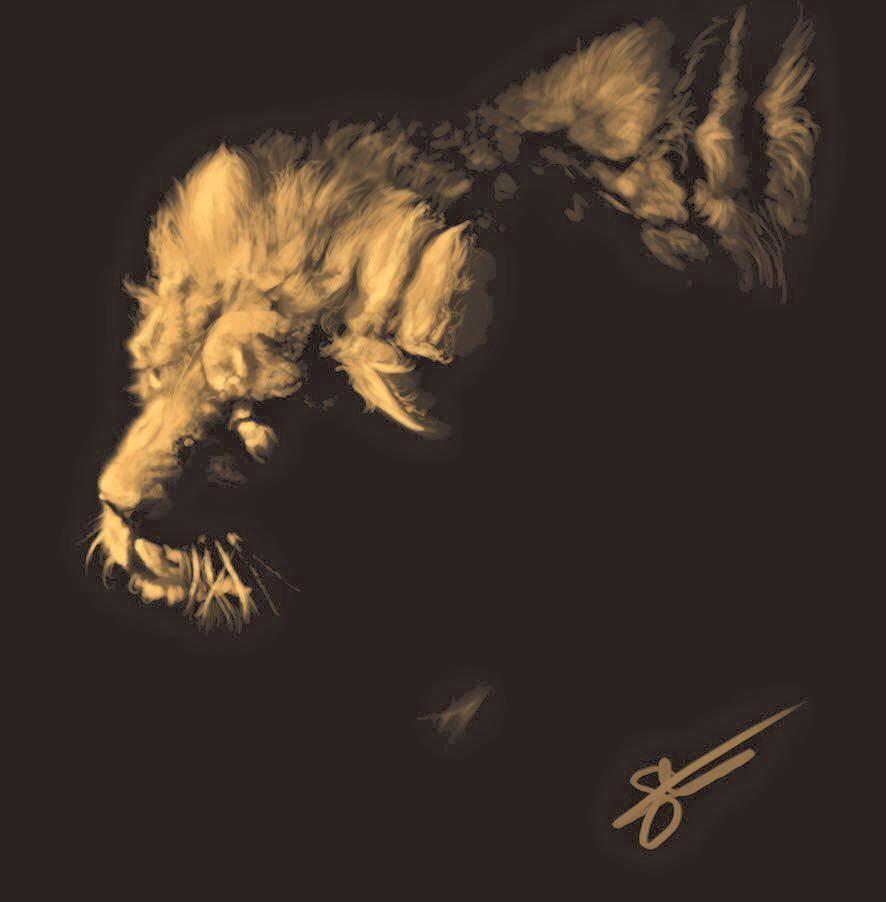 Lion Study   Video
