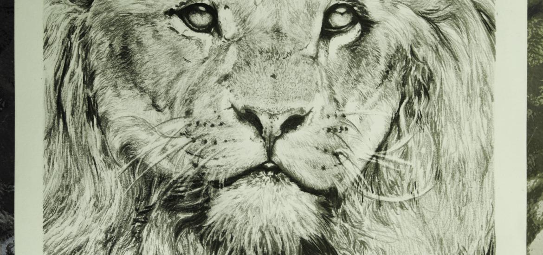 Lion Commission