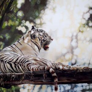 Lyrics Tiger