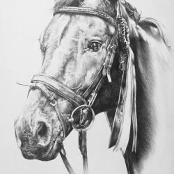 Horse Portrait – Commission