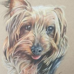 Heather Haymes, Lilly – Traditional, coloured pencil
