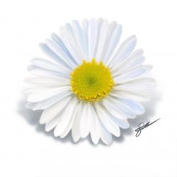 Daisy | Video
