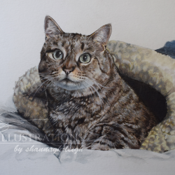 Oni the tabby cat commission