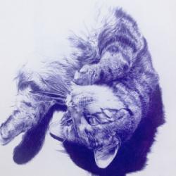 Tabby Cat Image